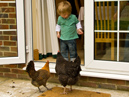 Oscar And Chickens